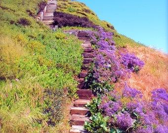 Purple Wildflowers Along Beach Stairs Photo- lavender, coastal, flowers, wall art, home decor, Fine Art Print