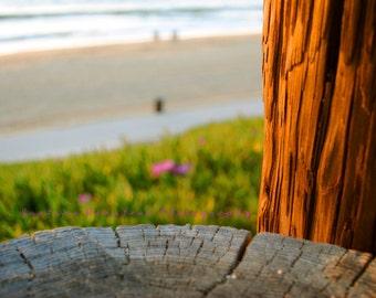 Wooden Beach Posts Woodgrain Detail Fine Art Photograph