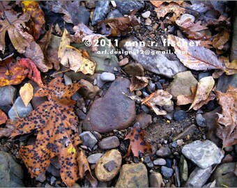 Autumn Creek Bed Collage, Rocks and Leaves, Fine Art Photography, Nature Photo