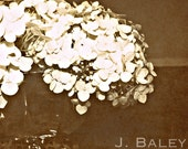 Photograph - Botanical - Fine Art Print  - Hydrangeas - 12 x 12 - Home Decor