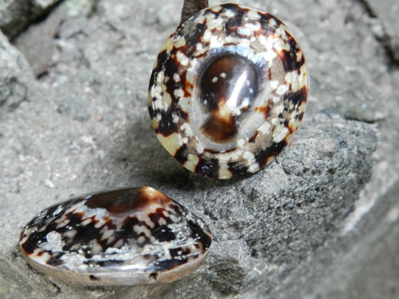 Natural Round Nerite Sea Shell Beads