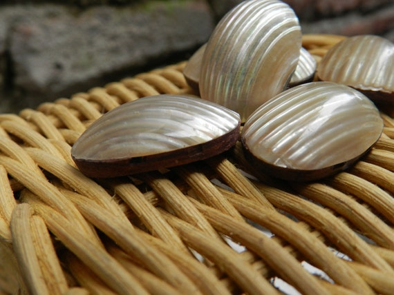 Natural Dome Pearly Sea Shell Beads