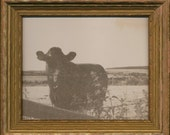 "VanDyke Brown ""Countryside Cow"" Framed Print"