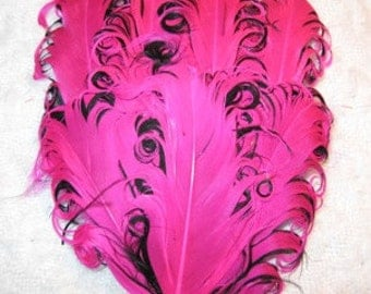 Hot Pink Fuchsia & Black  Nagorie Curled Feather Pad
