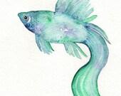 Beta Fish/Teal, Blue, Purple/ Watercolor Print