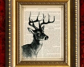 Vintage Art Print  recycled upcycled Antique Book Page print  White Tail DEER Dictionary Art Print 8x10