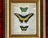 BUTTERFLY Collage 3 Color Vintage Art Print 8x10 on Antique 1881 Book Page or Dictionary Page