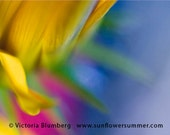 Colorful Flower Macro Photography