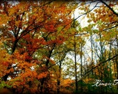 Autumn Is Here- 8x10 Photography Print
