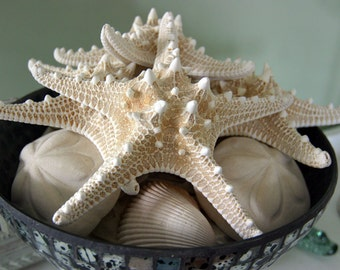 Big Bowl, White Starfish, Shells, Ocean, Coastal, Seafoam Background,  Beach, Original Signed Print by Photographer, Guy Pushée
