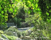 Garden Bench photograph, garden photograph, garden landscape photograph, greens, wooden bench, 8 x 12