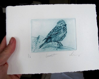 Drypoint Linnet. Bird print. Limited Edition