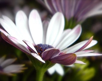 Daisy Photography,Flower Photography, Floral Photography, Macro Daisy Photo, Macro Floral Photo, Macro Photography, Home Decor, Wall Art