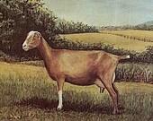 Goat Milk Fudge, One Pound
