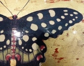 Laquered Decoupage Placemats with Butterfly Motifs. 4 Pieces.