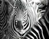 "Safari Fine Art Photography - ""11x14 -  Reserved for Lesly G."