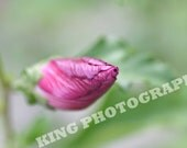 1029 - A Flower To Be - spring bud 7x5 print