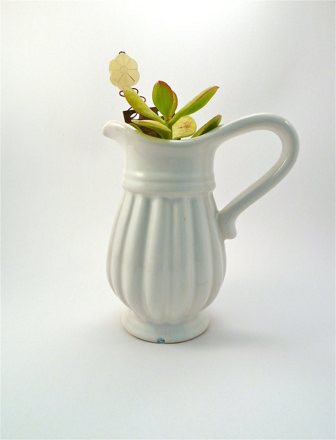 small white vase with succulent