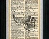 Skull Side Vintage Illustration on Book Page Art Print (id5506)