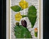 Retro Cactus Flower Fruit 07  Vintage Illustration on Book Page Art Print (id6606)