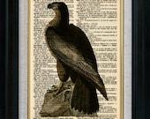 American Eagle Vintage Illustration on Book Page Art Print (id7002)