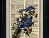 Blue Jay Birds Vintage Illustration on Book Page Art Print (id7021)