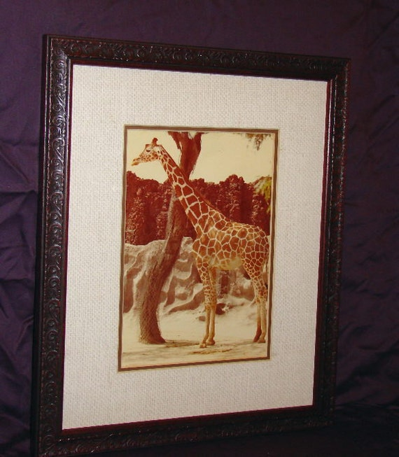 Framed Art / Giraffe Zoo / Vintage Photo