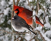 "Bird Photography Print - Winter Bird Photo - 8x10 Fine Art Photograph - Bird Print Photography - Bird Wall Art - ""Cardinal & Junco"""""