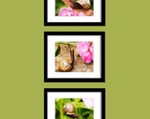 Snail Photography Set of 3, on Brown Leaf, on Brown Stone, on Green Leaf, 8x10, Fine Art Photo Print, Three
