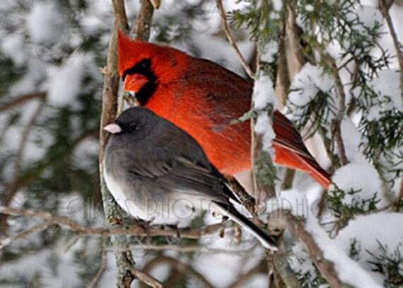 Items Similar To Bird Photography Print