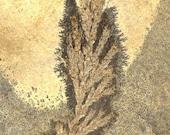 Eocene Art - Moontree