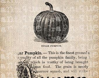Antique Autumn Pumpkin Dictionary Halloween Illustration Digital Download for Papercrafts, Transfer, Pillows, etc Burlap No 2493