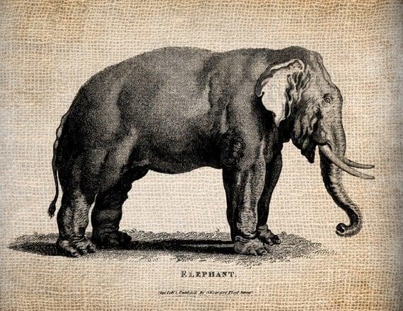 Antique Elephant India Animal  Clipart  Illustration Printing  Digital Download for Papercrafts, Transfer, Pillows, etc. Burlap No 1327