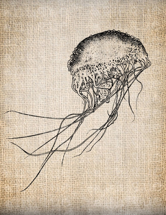 Vintage jellyfish illustration - photo#33