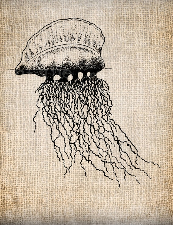 Vintage jellyfish illustration - photo#13