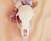skull and crystals still life photo. 8x10