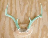 RESERVED for: Joelyn. painted and mounted deer antlers, CUSTOM COLORS. you pick. ready to hang.