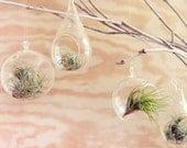 pear shaped glass hanging terrarium, and little air plant, desk garden, DIY