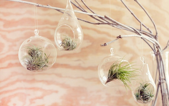 Buy 5 get 1 free /// sphere shaped glass hanging terrariums, desk garden, DIY wedding or shower