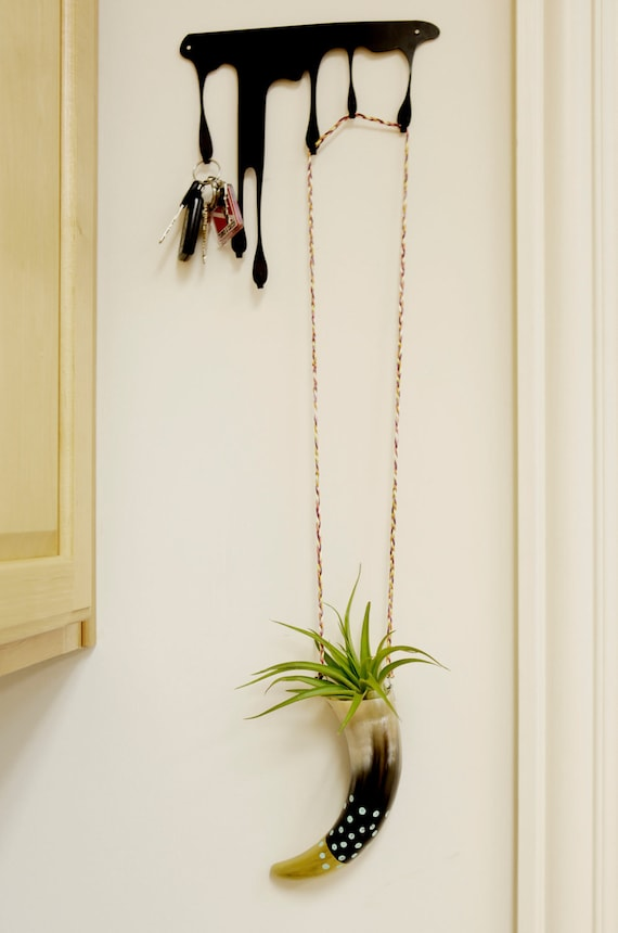 Buffalo horn air plant holder/ succulent planter. detailed with teal polka dots and a gold tip.