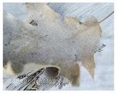 Autumn Leaf Photography Print 7.5x9.5 faded soft grey earth tone wood