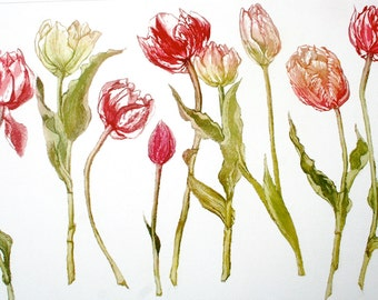 Tulips, a botanical Etching with Aquatint  vibrant colour. Large  plate .