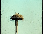 Stork Nest in Hungary - small size - Europe - Hungary Photo - Fine Art Photography - Bird Decor - Hungary Photography