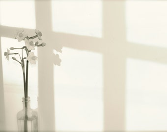 Black and white minimalist flower and shadow photograph Daffodil in vase