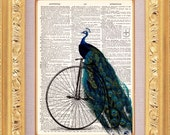 Peacock Riding A Bike - Vintage Dictionary Print Vintage Book Print Page Art Upcycled Vintage Book Art