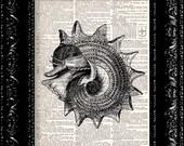 Black Sea Shell - Vintage Dictionary Print Vintage Book Print Page Art Upcycled Vintage Book Art