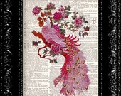 Pink Peacock - Vintage Dictionary Print Vintage Book Print Page Art Upcycled Vintage Book Art