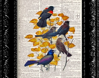 Vintage Bird Illustration Print - Vintage Dictionary Print Vintage Book Print Page Art Upcycled Vintage Book Art