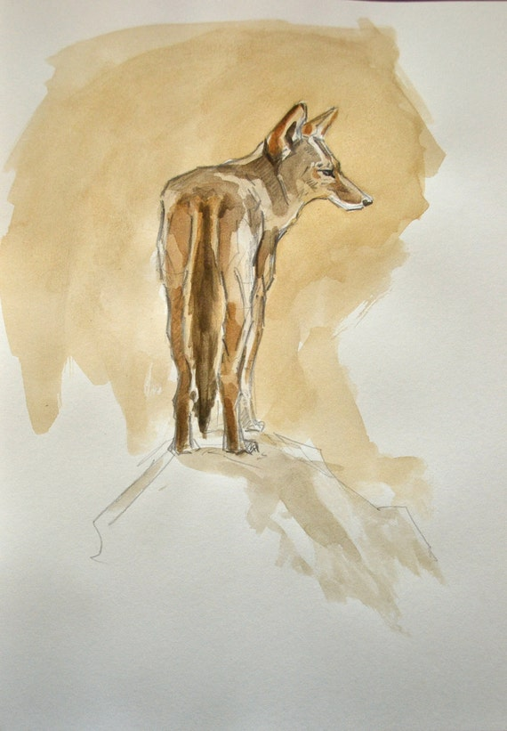 Coyote Watercolor Painting 9x11
