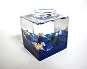 Aqua Terrarium / Five Marimo Moss Ball Friends in Their Glass Block Home Terrarium